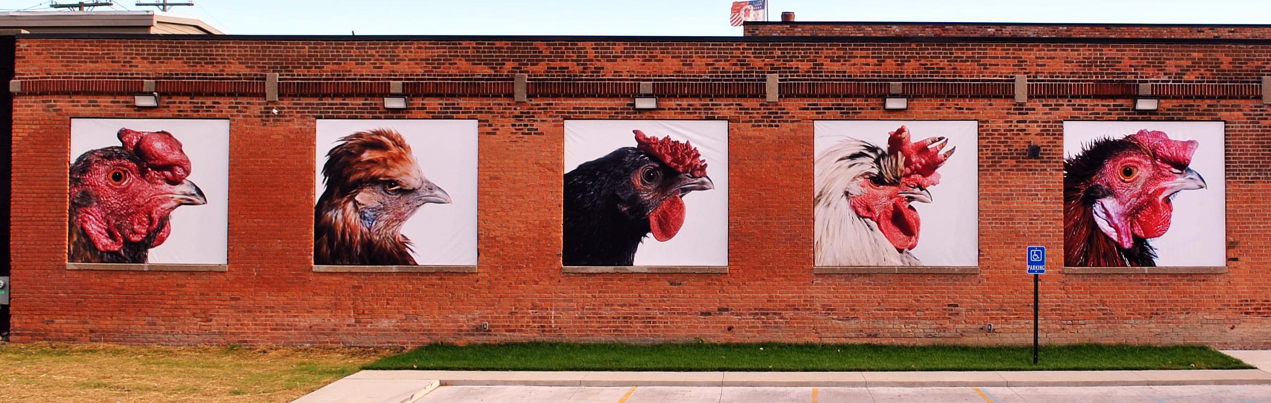 kvm-chicken_exterior