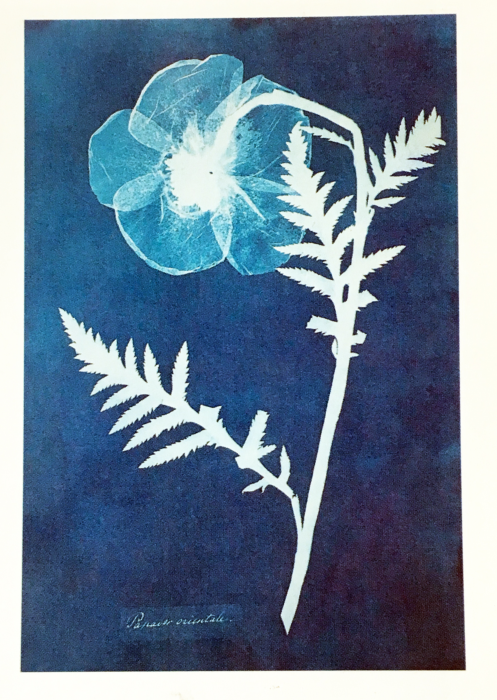 Blue photogram
